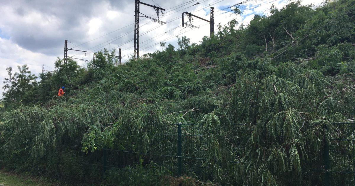 Stop à l'abattage des arbres et des haies sur Massy en période de nidification !