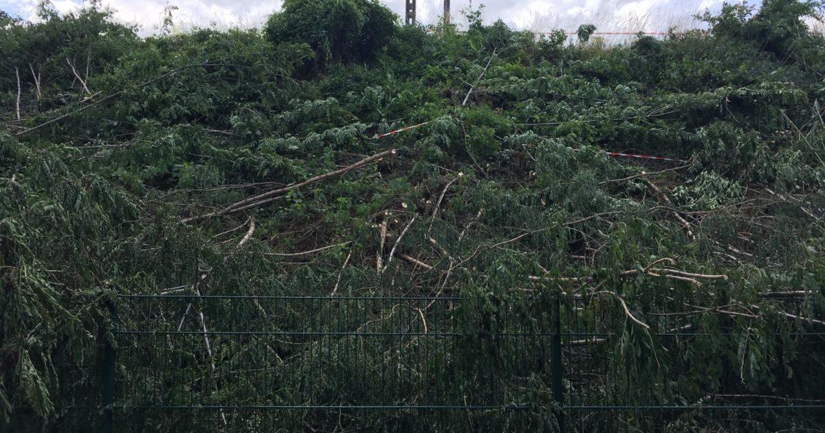 Abattage des arbres et des haies à Massy : première victoire